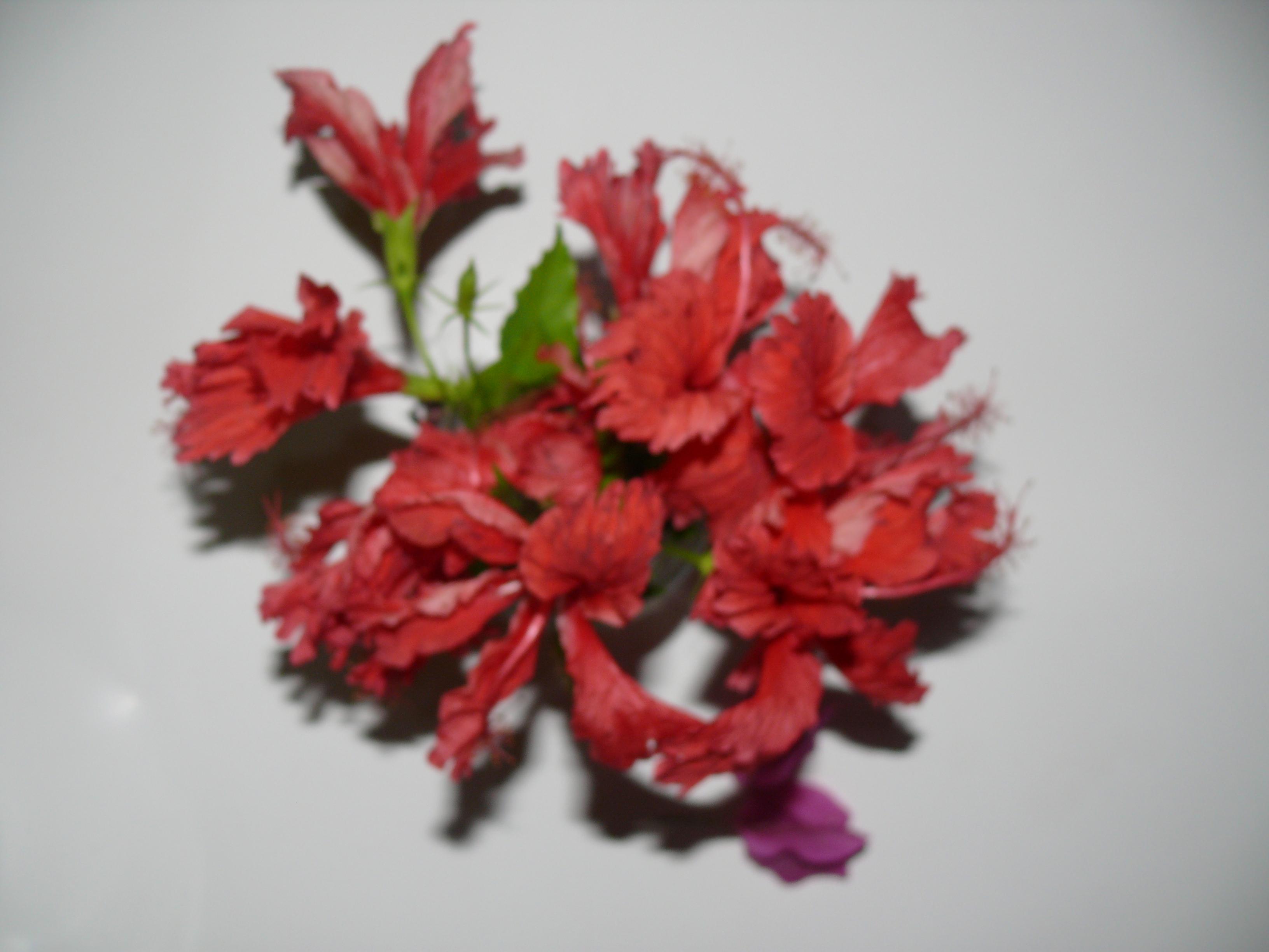 exotic flower 2