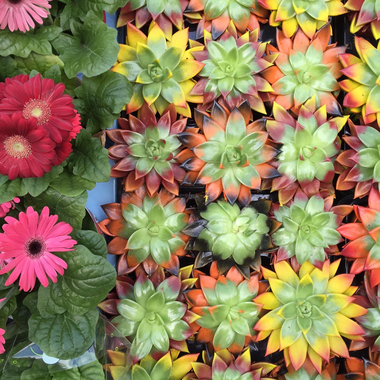 marche fleurs italie