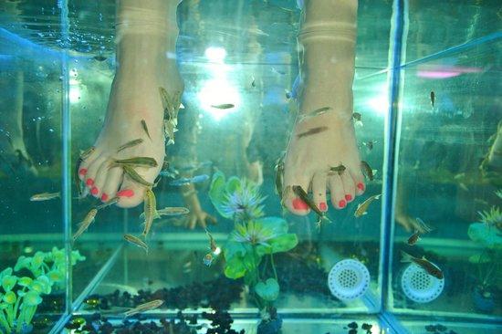 nature-fish-spa